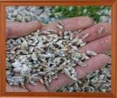 Kültür Mantarı Tohumu 100 Gr Beyaz Şapkalı Mantar Miseli 500 Grm Torf Hediye