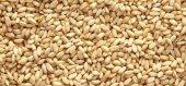 Buğday Yarması 1 Kg