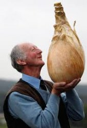 Dev İngiltere Soğanı Tohumu 25 Tohum + Süpriz
