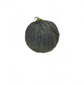 Siyah Kışlık Kavun Tohumu 15 Tohum + Süpriz Hediye Tohum