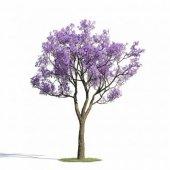 Jacaranda Ağacı Fidanı Jakaranda 50 70 Cm Tüplü Fide