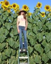 Dev Ayçiçeği Tohumu Ay Çiçeği Çekirdeği Tohumu 8 Metre 3 Tohum