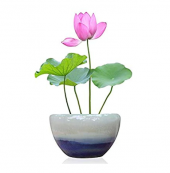 Nikah Şekeri Kutsal Lotus Nilüfer Çiçeği Tohumu