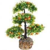 Bodur Meyveli Erik Bonzai Ağacı Tohumu 2 Tohum Bonsai Ekim Seti
