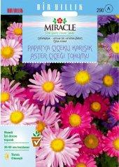 Papatya Çiçekli Karışık Renkli Chinensis Aster...