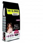 Pro Plan Somonlu Sensitive Yetişkin Köpek Maması 16.5 Kg-2