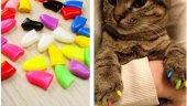 Kırmızı Yapıştırma Kedi Tırnağı Pembe Xs ...