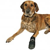 Trixie Köpek Patiği , Neopren , 2 Ad , M , Siyah