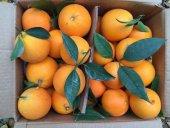 Finike Portakalı 1 Koli (  Yaklaşık 11 kg)