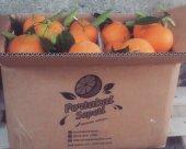 Finike Portakalı 1 Koli (  Yaklaşık 11 kg)-2