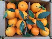 Finike Portakalı 1 Koli (  Yaklaşık 11 kg)-3