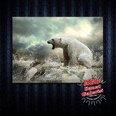 Hayvanlar Dekoratif Tablo Kutup Ayısı