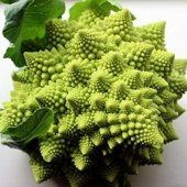 Eko Paket 150 Tohum Nadir Piramit Brokoli Tohumu + Süpriz Hediye-3
