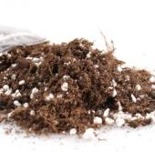 Nadit İthal Beyaz Gül Bonsai Ağacı Tohumu Bonzai Tohumu Seti-5