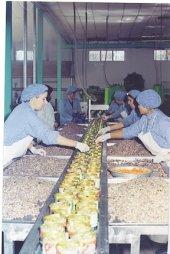 Doğan Çiftliği Konserve Yaprak Sarma 400gr. 6lı Paket (DK11)-4