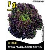 Marul Tohumu Akdeniz Kıvırcığı 1 G. (Takribi...