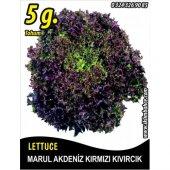 Marul Tohumu Akdeniz Kıvırcığı 5 G. (Takribi...