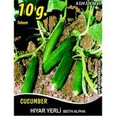 Hıyar Tohumu Salatalık Yerli 10 G (Takribi 200 Tohum)