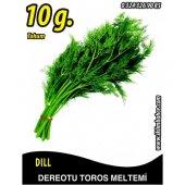 Dereotu Tohumu Toros Meltemi 10 G (Takribi 2500 Tohum)