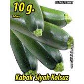 Kabak Tohumu Siyah Dolmalık 10 G. (Takribi 50 Tohum)