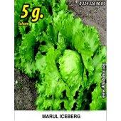 Marul Tohumu Iceberg 5g. (Takribi 2750 Tohum)