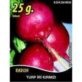 Turp Tohumu Toros Kırmızısı 25g (Takribi 1500 Tohum)