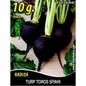 Turp Tohumu Toros Siyahı 10 G (Takribi 600...