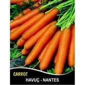 Havuç Tohumu Scarlet Nantes Pk 5g (Takribi 2000 Tohum)