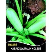 Kabak Tohumu Sakız Beyaz Dolmalık 10 G (Takribi 35 Tohum)