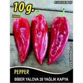 Biber Tohumu Yalova Yağlık 28 10 G (Takribi 800 Tohum)