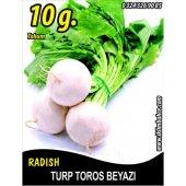 Turp Tohumu Toros Beyazı 10 G (Takribi 600 Tohum)