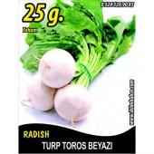 Turp Tohumu Toros Beyazı 25 G. (Takribi 2250 Tohum)