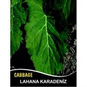 Lahana Tohumu Karadere (Yaprak) 10g (Takribi 1300 Tohum)