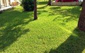 Yarı Gölge Alanlar İçin Çim Tohumu