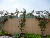 Pvc Bambu Bahçe Çiti 100x300cm Dekoratif Seperatör