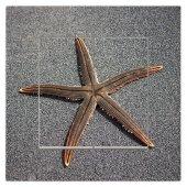 Dekoratif Baskılı Elektrik Düğmesi-Priz-Kapı Zili Deniz Yıldızı