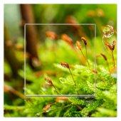 Dekoratif Baskılı Elektrik Düğmesi Priz Kapı Zili Yeşillikler
