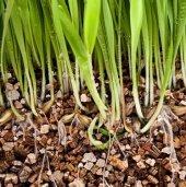 Vermikulit 100 Litre Tohum Çimlendirme Tarımsal Ve...