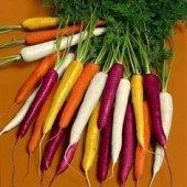 5 Adet Rainbow Gül Tohumu HEDİYE - Hollandadan İTHAL Gökkuşağı(Rainbow) Havuç Tohumu - 25 Tohum