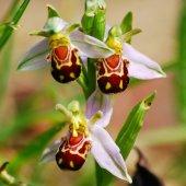 5 Adet Rainbow Gül Tohumu HEDİYE - Bin Bir Çeşit PHALAENOPSİS Orkide Tohumu ( 15 Adet Tohum)
