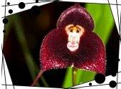 5 Adet Rainbow Gül Tohumu HEDİYE - Bin Bir Çeşit PHALAENOPSİS Orkide Tohumu ( 15 Adet Tohum)-7