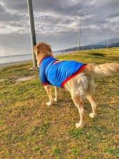 SUPERMAN TSHIRT BÜYÜK KÖPEKLER İÇİN-3