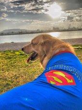 SUPERMAN TSHIRT BÜYÜK KÖPEKLER İÇİN-4