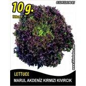 Marul Tohumu Akdeniz Kıvırcığı 10 G. (Takribi 5500 Tohum)