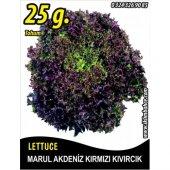 Marul Tohumu Akdeniz Kıvırcığı 25 G. (Takribi 17500 Tohum)