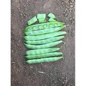 Fasulye Tohumu Özlem (Sırık) 50 G