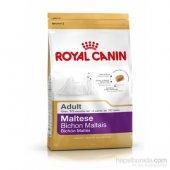 Yetişkin Maltese Terrier Irkı Özel Mama 1,5 Kg Royal Canin
