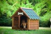 Mandu Isı Yalıtımlı Ahşap Köpek Kulübesi (Medium) (İsimlik+mama Kabı Hediye)