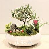 Asırlık Dost Zeytin Ağacı Bonsai