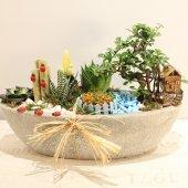 Bonsai ve Kaktüs Arajman